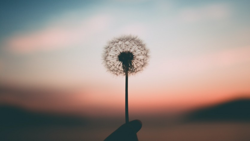 Let Hope Flourish